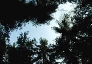 Základní principy přežití v přírodě  4/4 – Stresory
