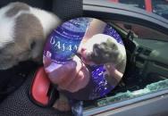 Záchrana malého štěněte z rozpáleného auta