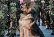 Čeští psí hrdinové ve službách AČR