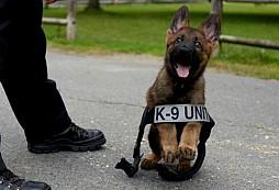 K9 psí doktor poskytuje profesionální 1. pomoc