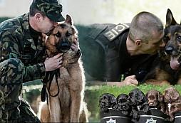 Výcvik psa - level 100 :)