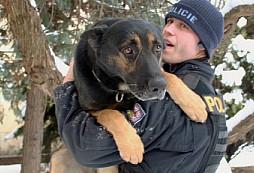 Služební psi - čtyřnozí hrdinové všedních dnů