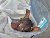 Jedinci, kteří týrají zvířata, jsou nebezpeční i lidem. Podle toho s nimi naložit…