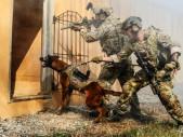Speciální brýle pro vojenské psy umožní psovodovi vydávat pokyny na dálku