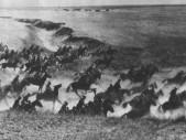 Útok Savojské kavalérie v roce 1942: Poslední zuřivý útok jezdectva