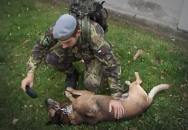 Péče AČR o vysloužilé psí vojáky
