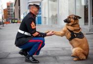 Psí válečnice Lucca dostala medaili za chrabrost. Při hledání min přišla o nohu