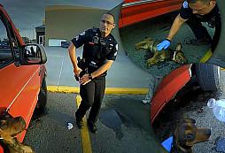 Policisté zachránili život malému psovi visícímu z okna zaparkovaného vozidla