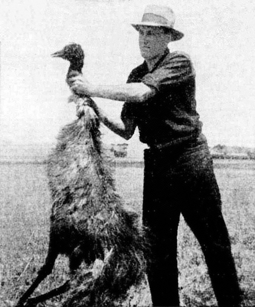 Deceased_emu_during_Emu_War
